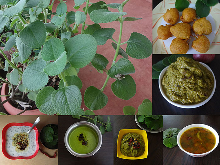 recipes from doddapatre leaves