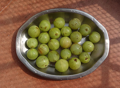 drying gooseberry for amla powder or nellikai pudi