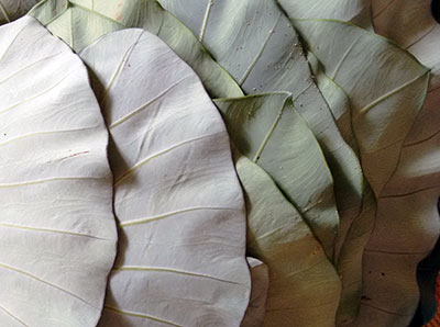 clean the colocasia leaves