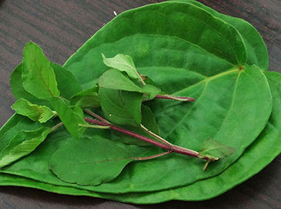 betel leaf and tulsi leaves for chest congestion or kapha