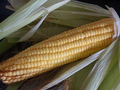 sweet corn cob for buttered sweet corn recipe