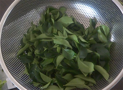 picking curry leaves to store it for long time