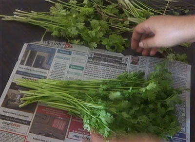 storing coriander leaves for long time